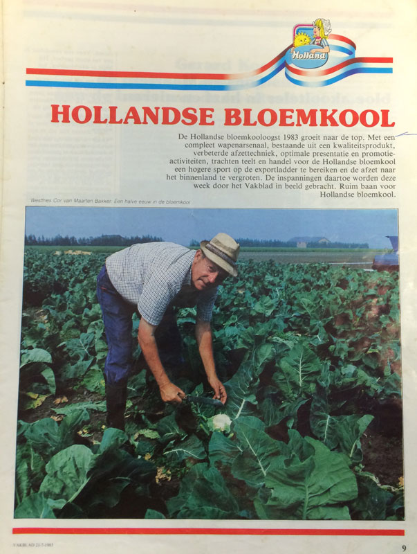 hollandse bloemkool